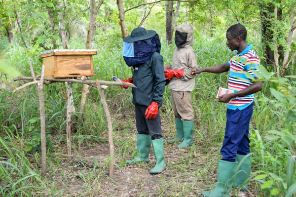 Imkerei in Togo Nachhaltigkeit
