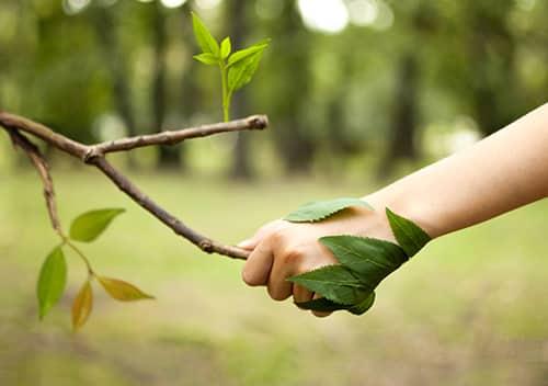 DEBATIN Nachhaltigkeitsoffensive